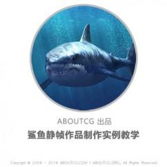 pro_shark_141011