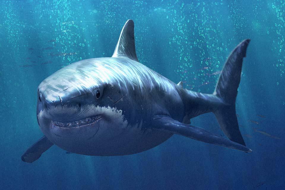 shark_news