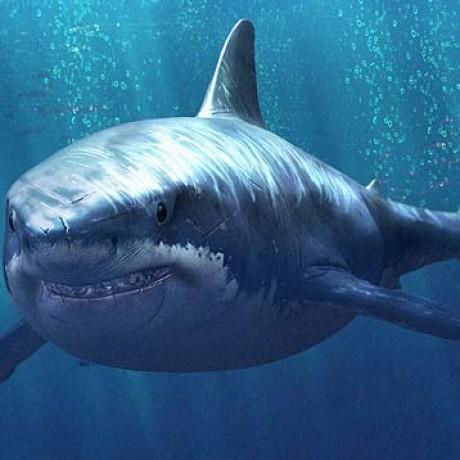 鲨鱼静帧作品制作实例 的群组图标